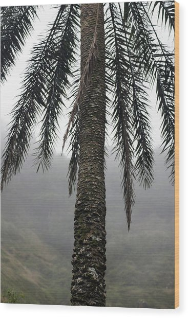 Palm, Koolau Trail, Oahu Wood Print