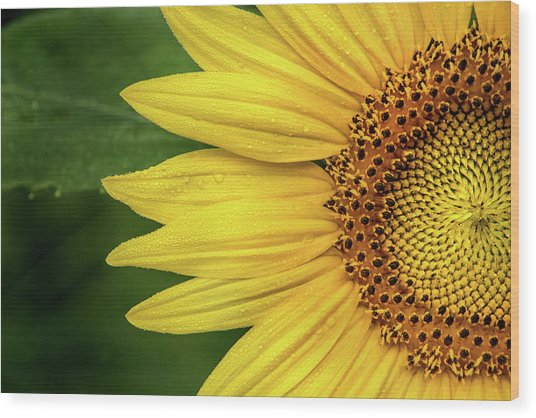 Partial Sunflower Wood Print
