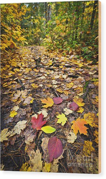Path In Fall Forest Wood Print