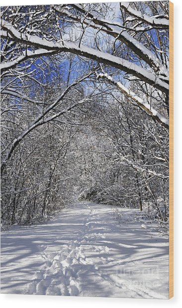 Path In Winter Forest Wood Print