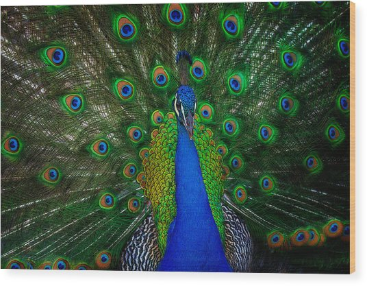 Wood Print featuring the photograph Peacock by Harry Spitz