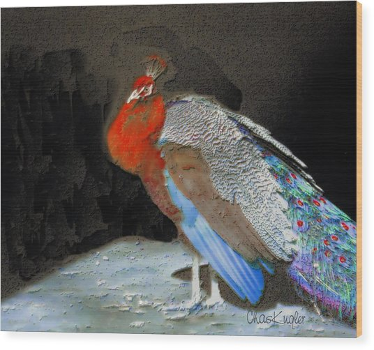 Peacock II Wood Print by Chuck Kugler