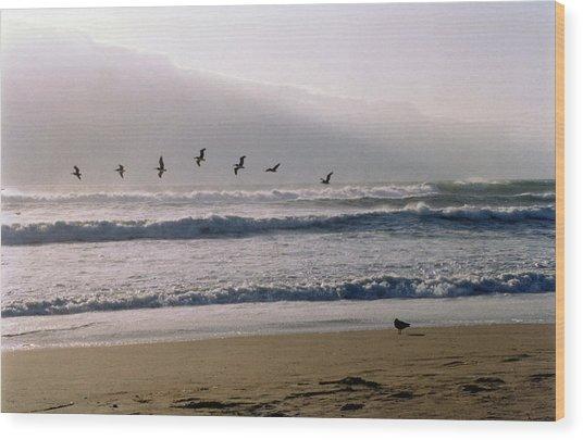Pelican Brief Wood Print by Brande Barrett