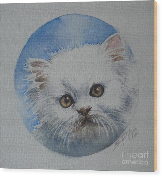 Persian Kitten Wood Print