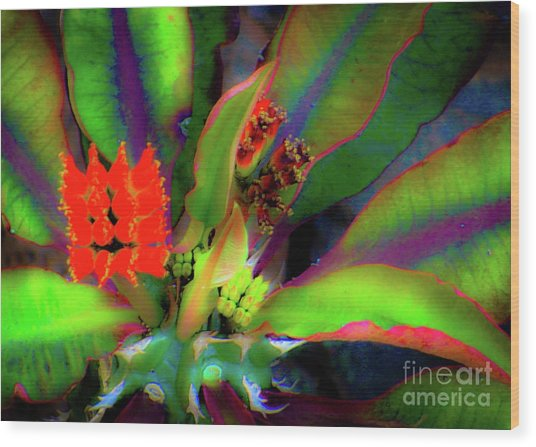 Wood Print featuring the photograph Plants And Flowers In Hawaii by D Davila