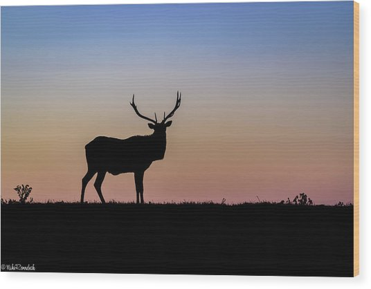 Point Reyes Elk Wood Print
