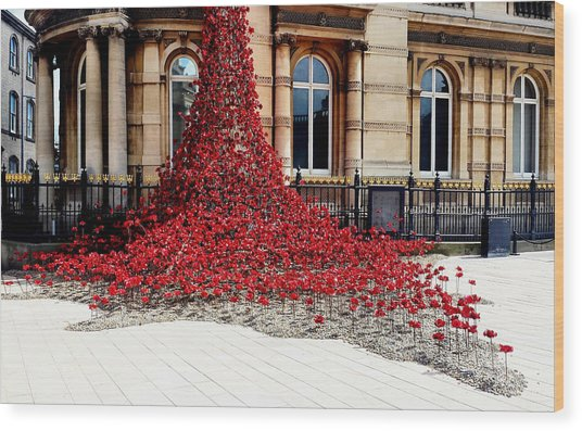 Poppies - City Of Culture 2017, Hull Wood Print