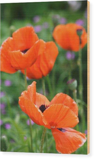 Poppies Wood Print by Melanie Beasley