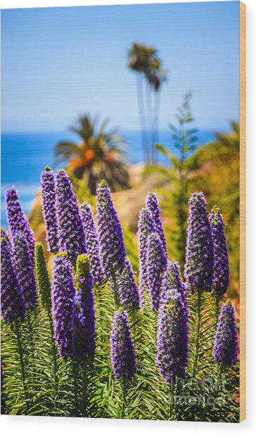 Pride Of Madeira Flowers In Orange County California Wood Print