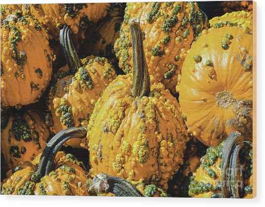 Pumpkins With Warts Wood Print