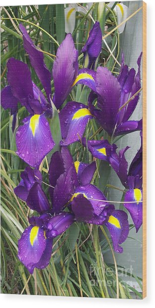 Purple Iris Wood Print by Gail Salitui