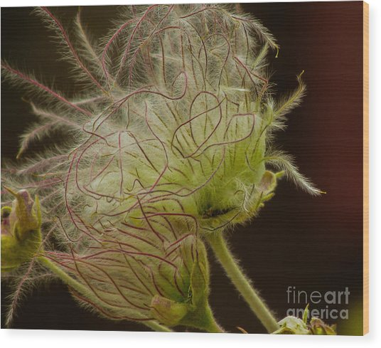 Quirky Red Squiggly Flower 3 Wood Print