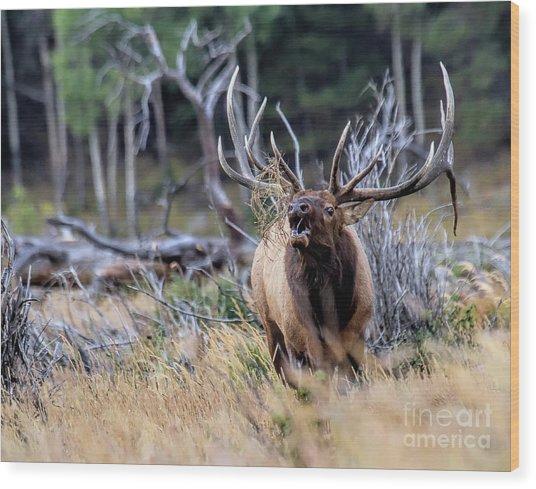 Raging Bull Wood Print