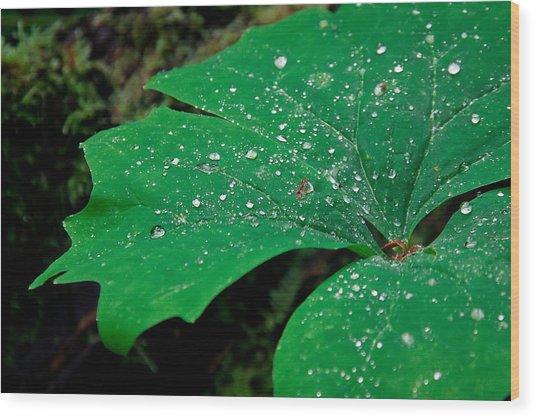 Rain Drops On Vanilla Leaf Wood Print by Jonathan Hansen