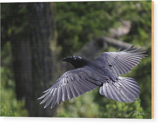Raven Flight Wood Print