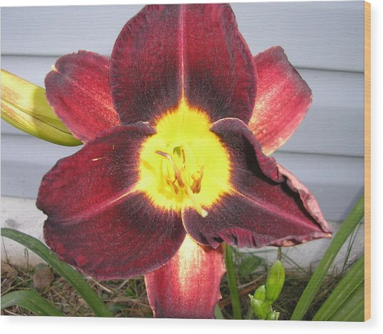 Red Lily Wood Print by Tina Antoniades