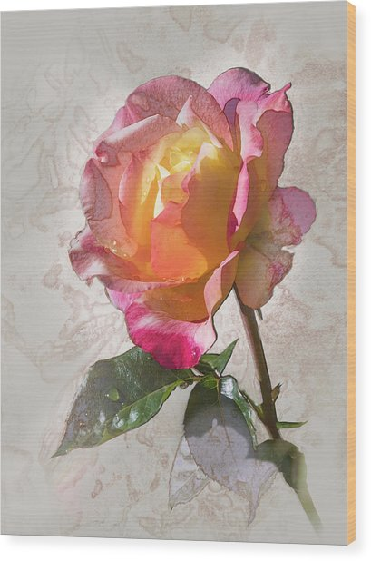 Rosa, 'glowing Peace' Wood Print