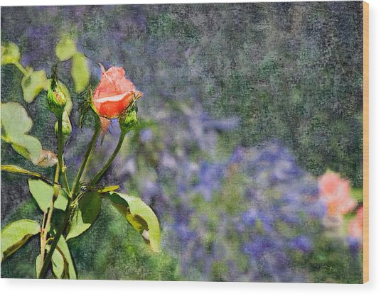 Rose Elegance  Wood Print
