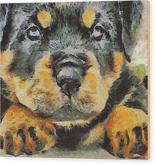 Rottweiler Puppy Portrait Wood Print