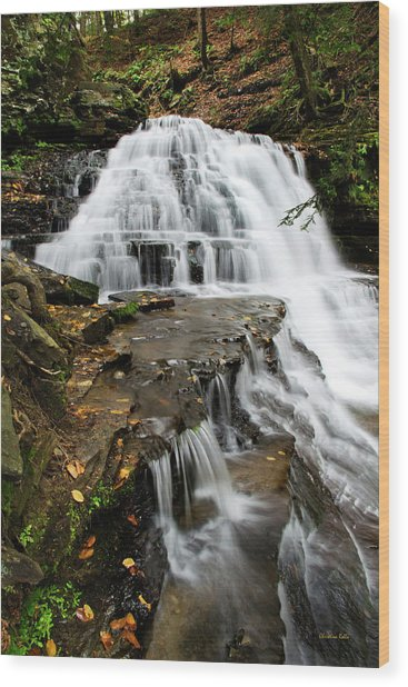 Salt Springs Waterfall Wood Print