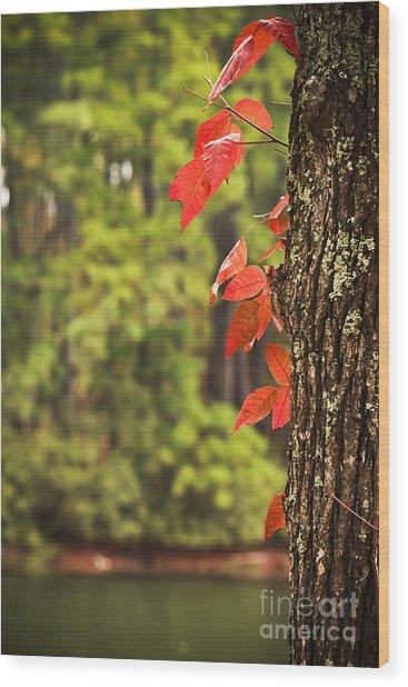 Scenic Elder Lake Wood Print