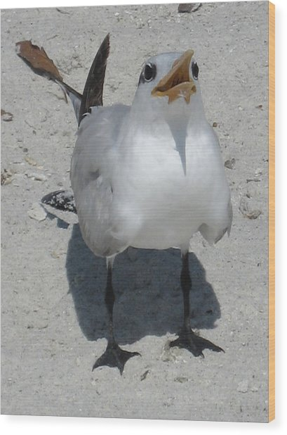 Seagull 2 Wood Print