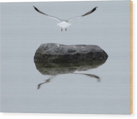 Seagull In Flight Wood Print