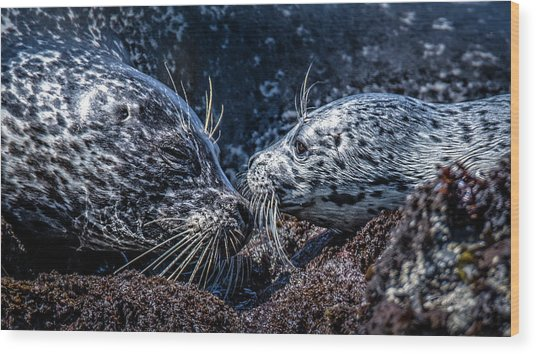 Seal Pup With Mom Wood Print