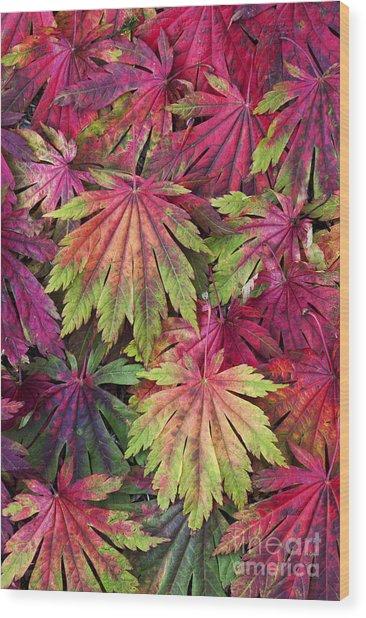 Seasons End Wood Print