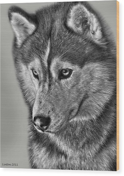 Siberian Husky 2 Wood Print by Larry Linton
