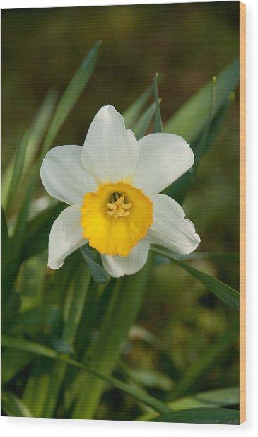 Single Daffodil Wood Print by Charlet Simmelink