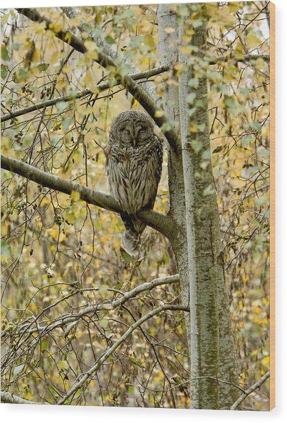 Sleeping Owl Wood Print by Vern Minard