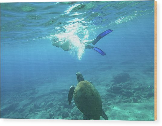 Snorkeler Female Sea Turtle Wood Print