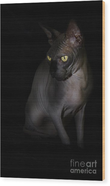 Sphynx Cat Portrait Wood Print