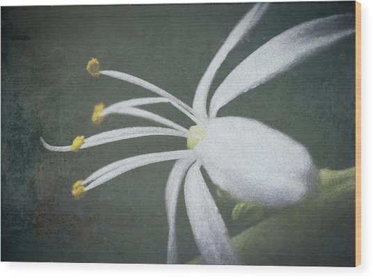 Spider Plant Flower II Wood Print