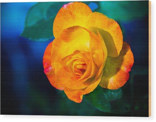 Spring Rose Wood Print by Barry Jones