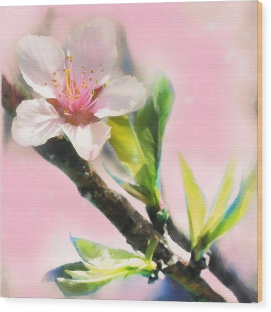 Spring Sunrise Wood Print by Gina Signore