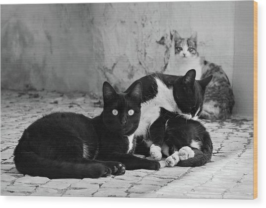 Wood Print featuring the photograph Street Cats - Portugal by Barry O Carroll