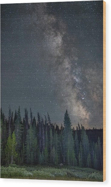 Summer Splendor Wood Print