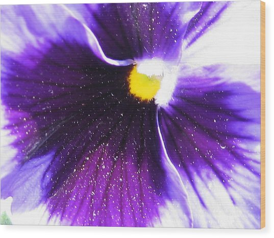 Sunburst Pansy Wood Print