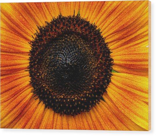 Sunflower Wood Print by Martin Morehead