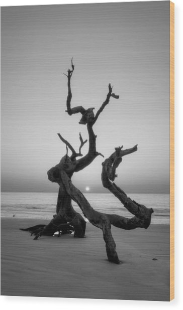 Sunrise On Driftwood In Black And White Wood Print