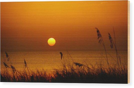 Sunrise Sea Oats Wood Print