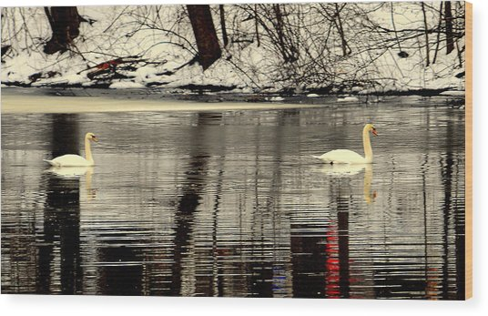 Swan Song Wood Print by Aron Chervin