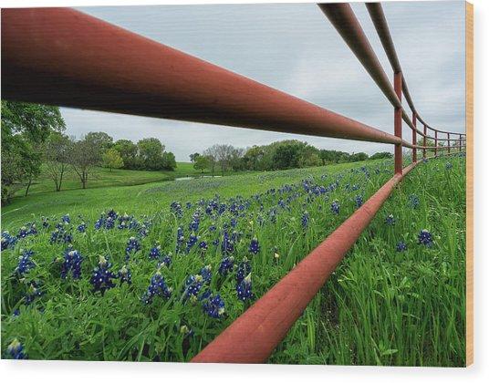 Texas Bluebonnets In Ennis Wood Print