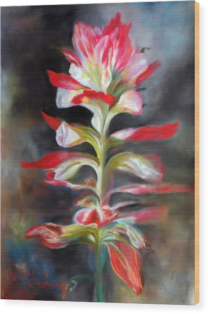 Texas Indian Paintbrush Wood Print