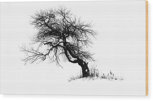 The Apple Tree Wood Print