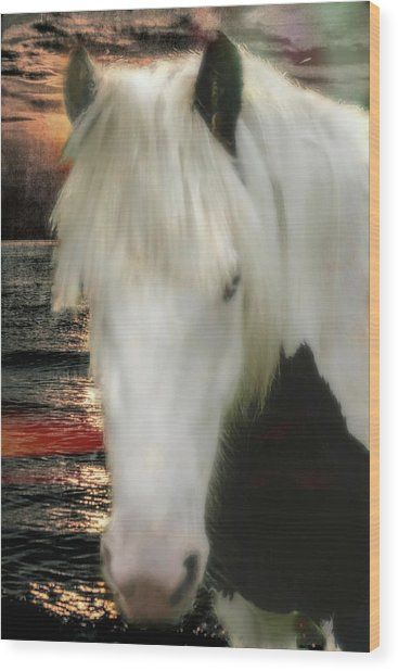The Beautiful Face Of A Gypsy Vanner Horse Wood Print