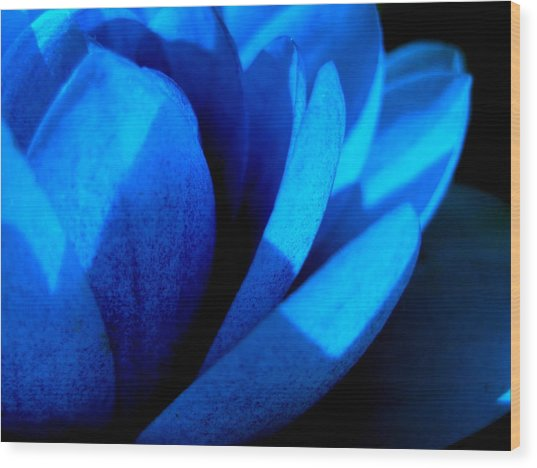 The Blue Lilly Wood Print by Catherine Natalia  Roche