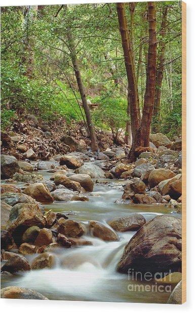 The Creek Wood Print by Marc Bittan
